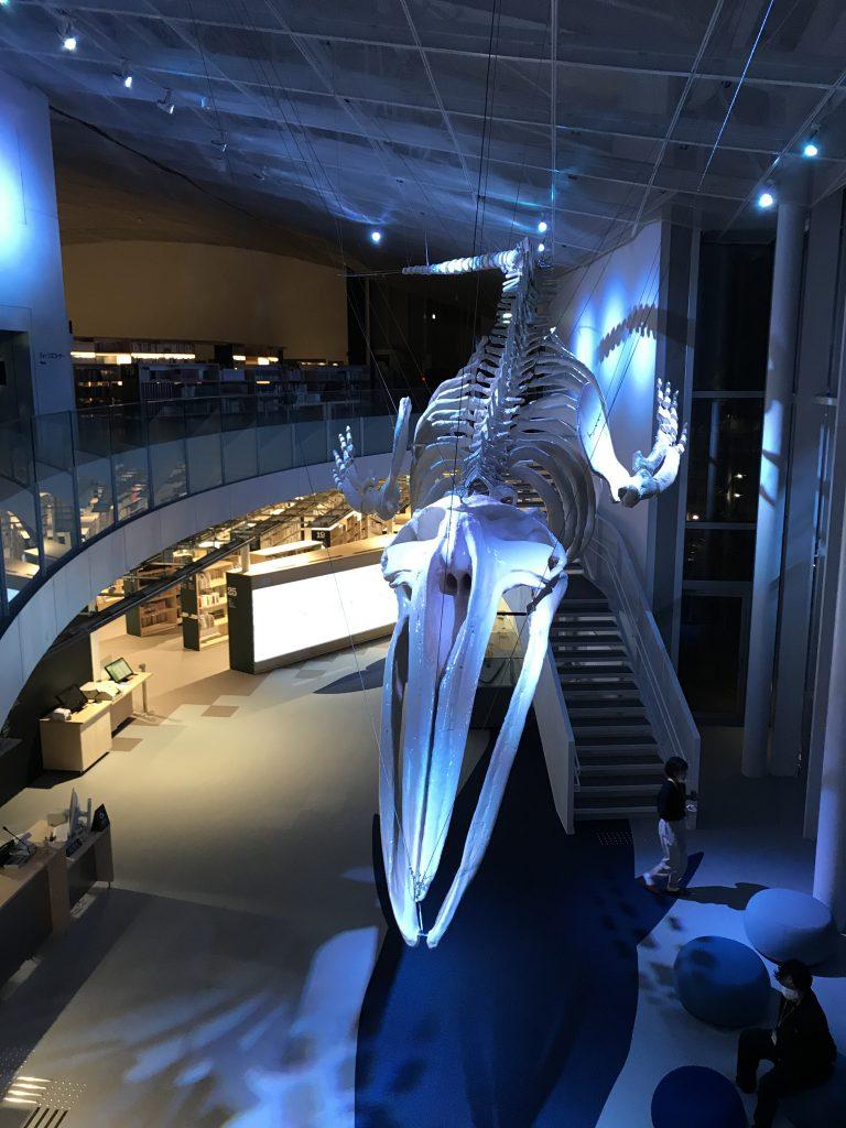 ■夜になると別の顔を見せるアキシマクジラ