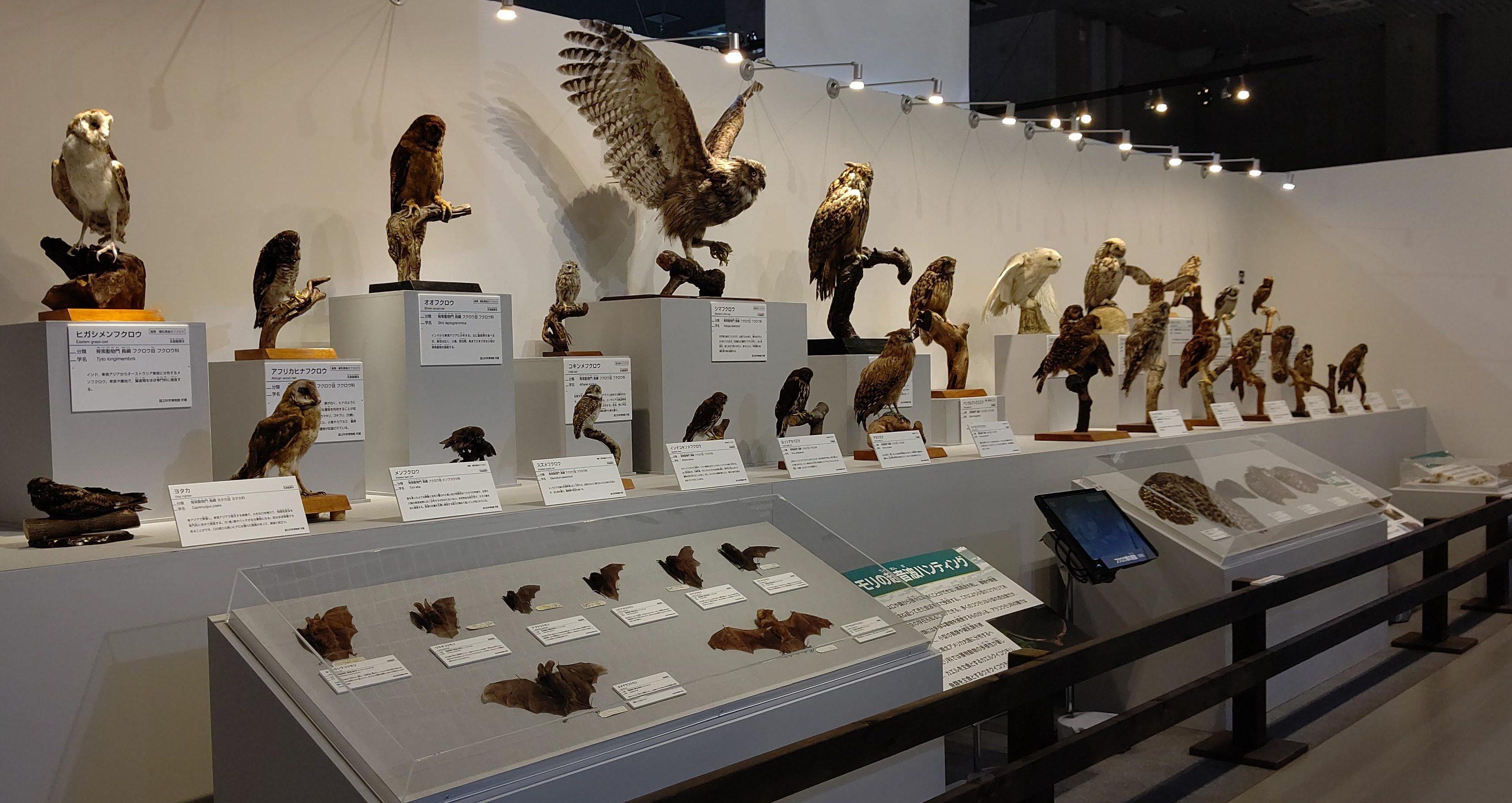 暗闇のハンター フクロウ展示