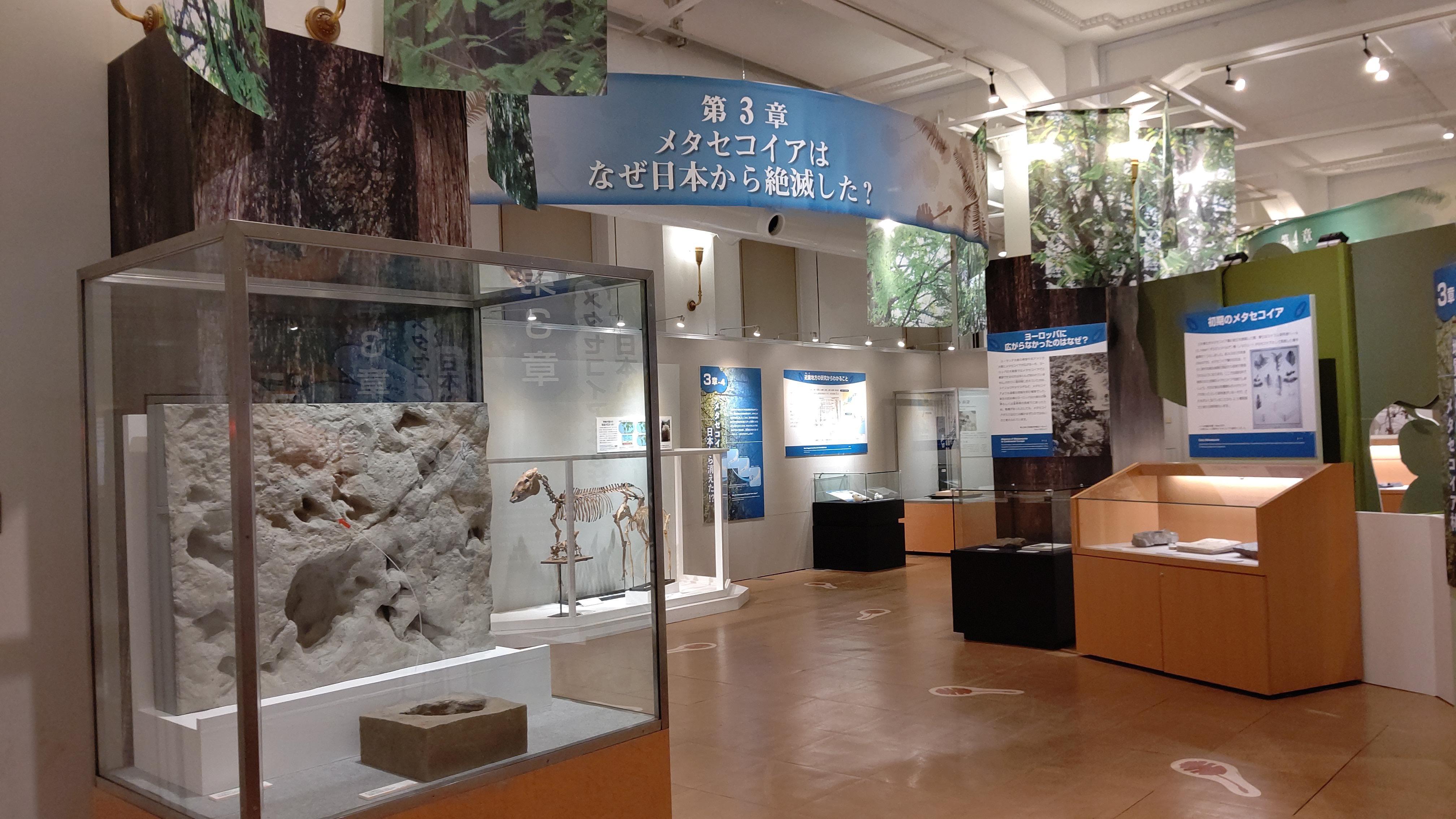 メタセコイアはなぜ日本から絶滅した?
